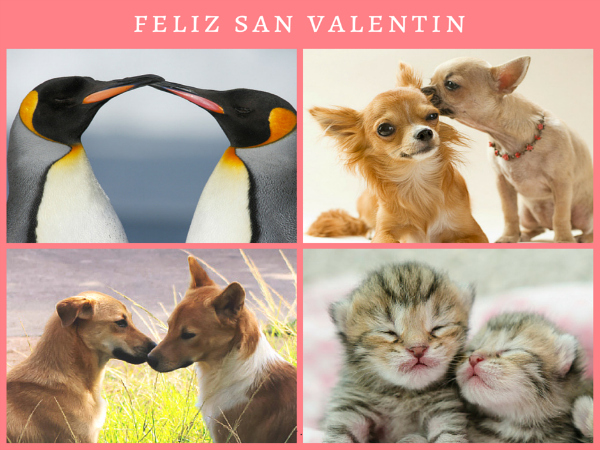 Special Valentine Animal ... The most tender animals!