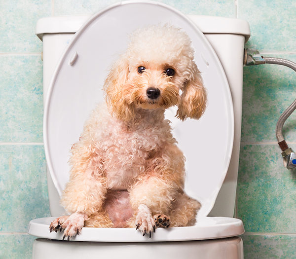 What do I do if my dog does not do his needs?