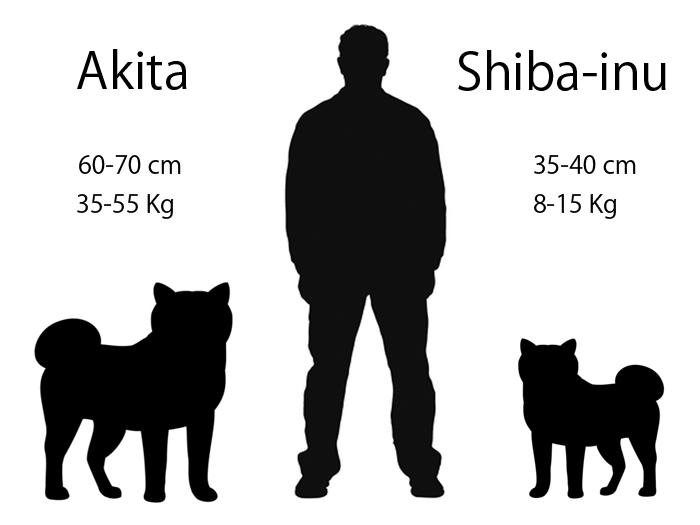Shiba Inu and Akita differences