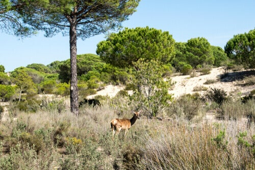 The Natura 2000 Network and the Directives that propose it –– My animals