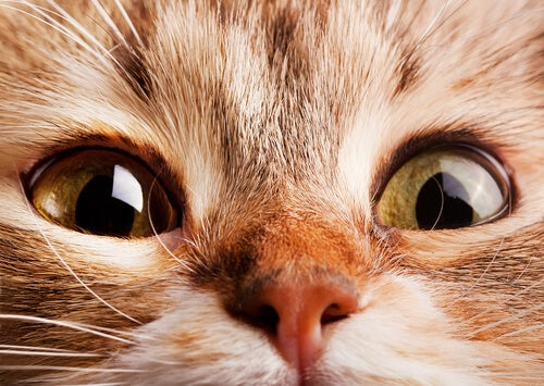 What causes accelerated breathing in cats? - My animals