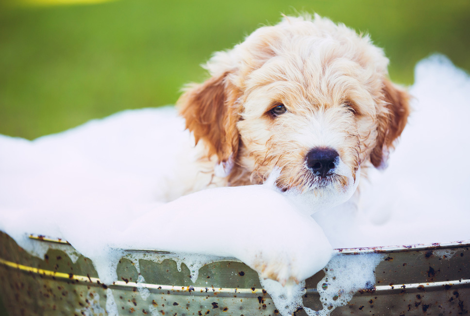 Funny gifs of dogs bathing and enjoying the summer