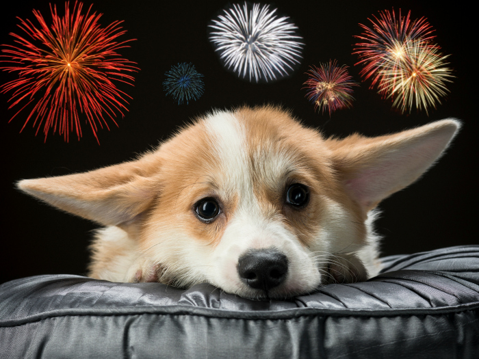 Trick to calm dogs during fireworks