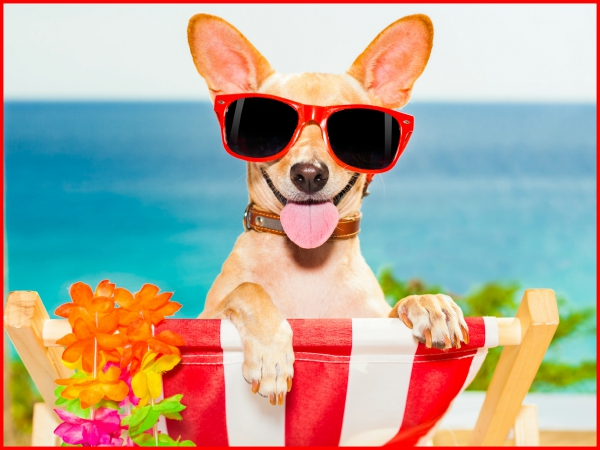 How to care for and refresh your dog in summer