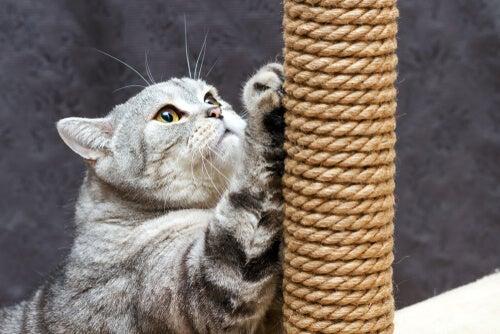 Cat with scraper