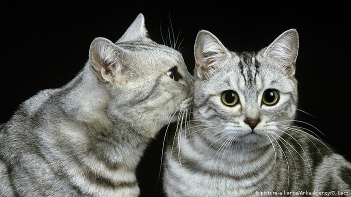Loving cats with hearts in their