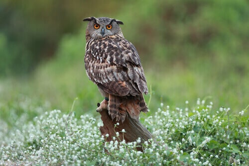 Eagle owl perched on a log