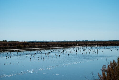 Bird species in Doñana can also be in the Natura 2000 Network