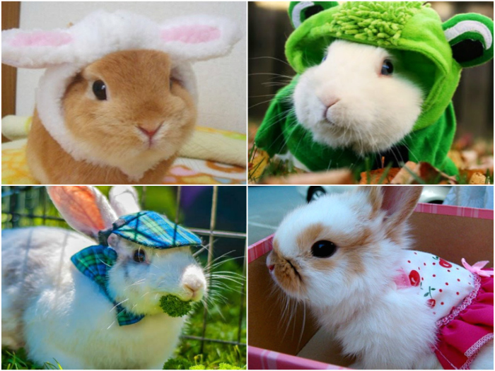 The best dressed rabbits: Super cute!