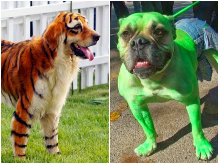The dogs with more fun and original costumes