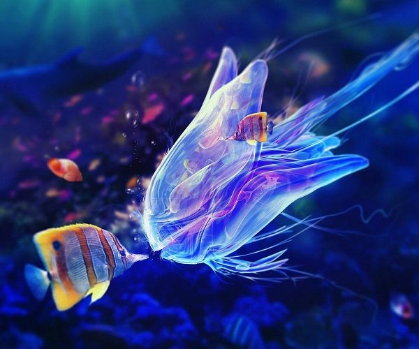 Top 10 most beautiful and unusual fish on the planet