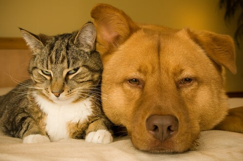 Health problems associated with obesity in dogs and cats - My animals