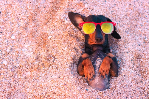 Tips to protect a dog from the sun - My animals