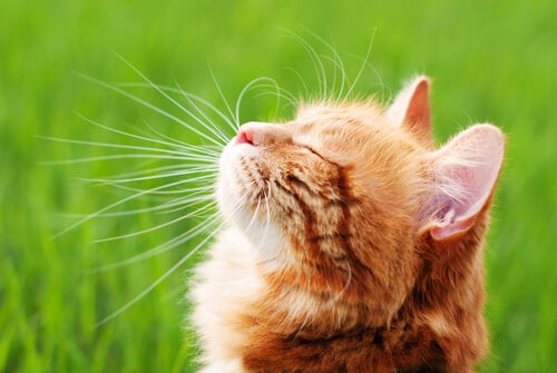 How to strengthen a cat's immune system? - My animals