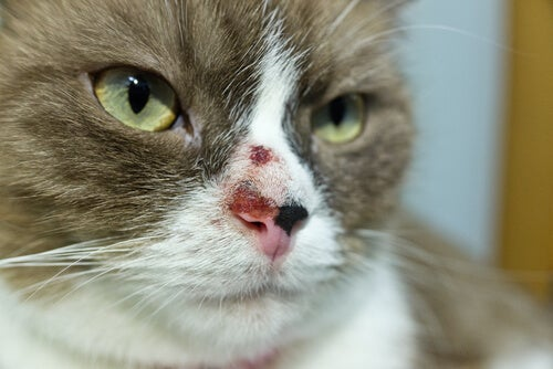 Causes of cancer in cats – Causes and treatment