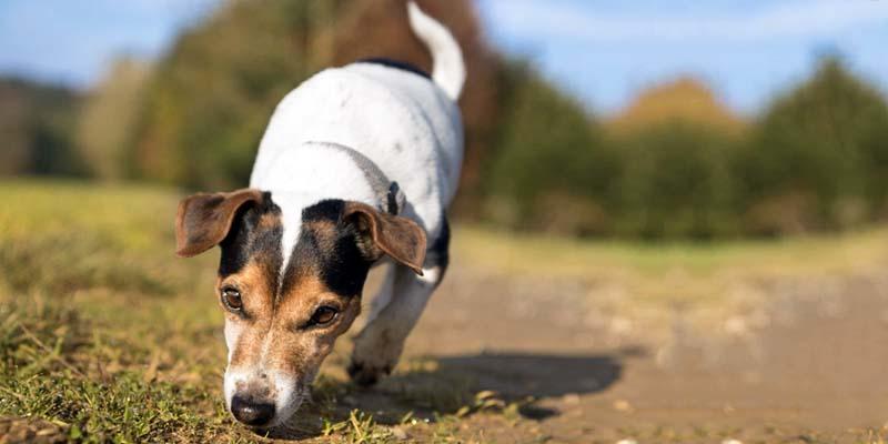 "dog's sense of smell-6-800x400 ""width ="" 800 ""height ="" 400"