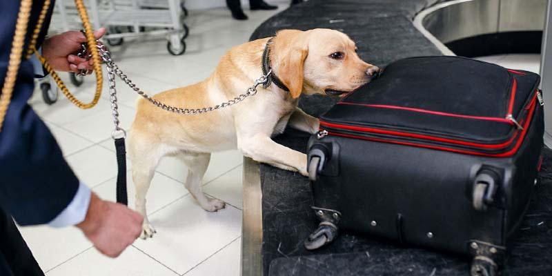 "dog's sense of smell-9-800x400 ""width ="" 800 ""height ="" 400"