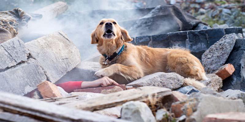"sense of smell dog-7-800x400 ""width ="" 800 ""height ="" 400"