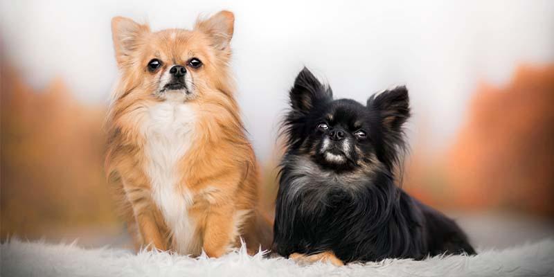 """pet dog1-800x400 """"width ="""" 800 """"height ="""" 400"""