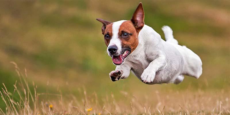 "hunting dog2-800x400 ""width ="" 800 ""height ="" 400"