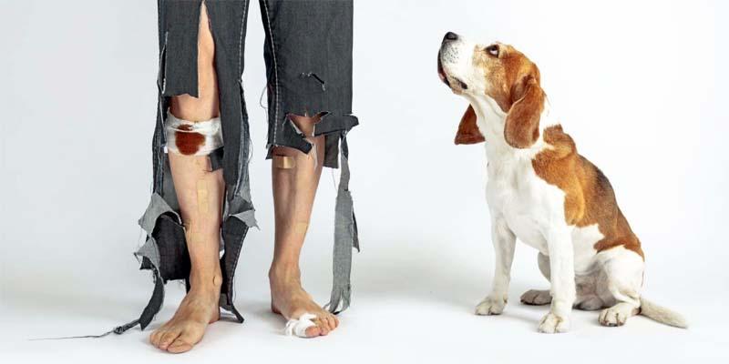 "dog insurance cat-4-800x400 ""width ="" 800 ""height ="" 400"