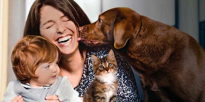 "insurance dog cat-9-800x400 ""width ="" 800 ""height ="" 400"