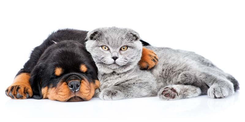 "dog insurance cat-13-800x400 ""width ="" 800 ""height ="" 400"