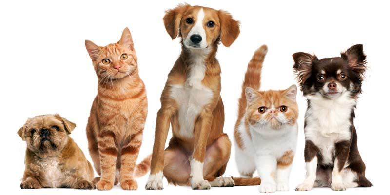 "dog insurance cat-3-800x400 ""width ="" 800 ""height ="" 400"