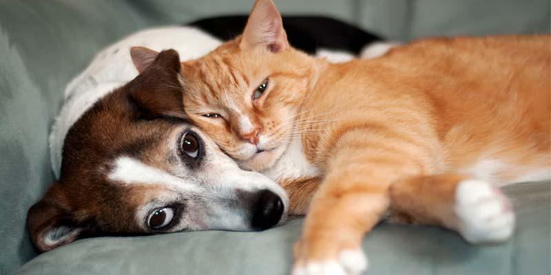 "insurance dog cat-11-800x400 ""width ="" 800 ""height ="" 400"