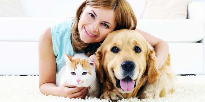 "dog insurance cat-10-800x400 ""width ="" 800 ""height ="" 400"