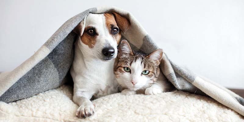 "dog insurance cat-12-800x400 ""width ="" 800 ""height ="" 400"