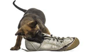 dog biting-2-300x180