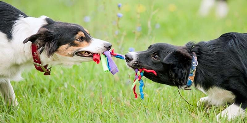 "dog biting-9-800x400 ""width ="" 800 ""height ="" 400"