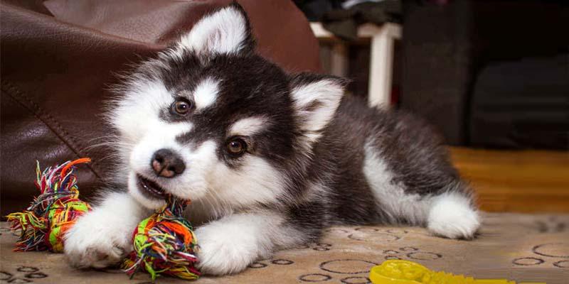"dog biting-8-800x400 ""width ="" 800 ""height ="" 400"