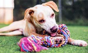 dog biting-4-300x180