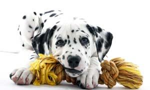 dog biting-5-300x180