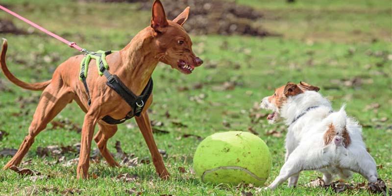 "aggressive-dog-9-800x400 ""width ="" 800 ""height ="" 400"