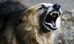 dog-aggressive-3-300x180