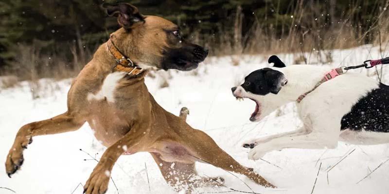"aggressive-dog-7-800x400 ""width ="" 800 ""height ="" 400"