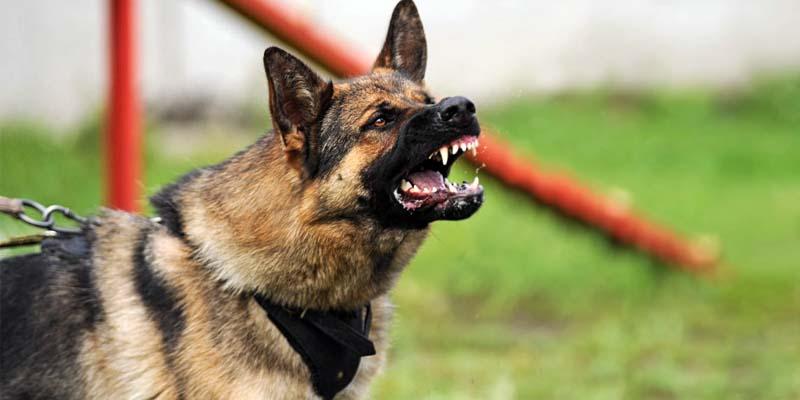"aggressive-dog-6-800x400 ""width ="" 800 ""height ="" 400"