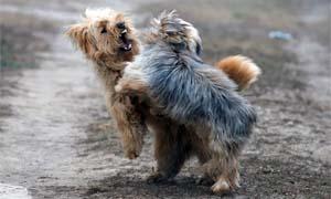dog-aggressive-4-300x180