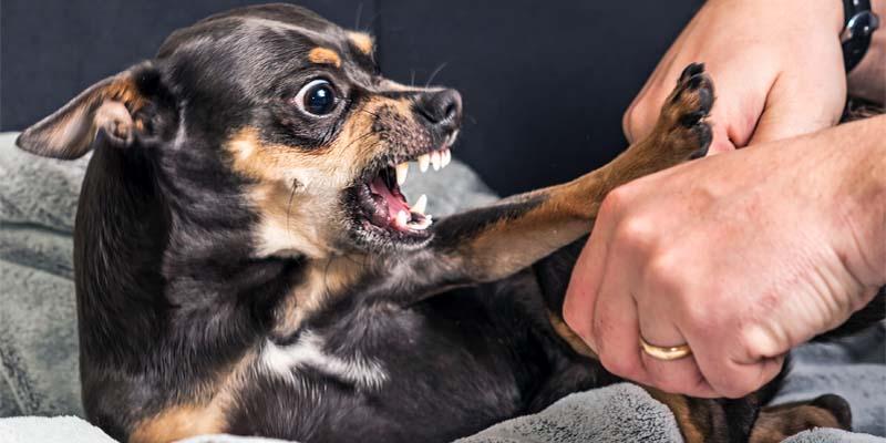 "aggressive-dog-8-800x400 ""width ="" 800 ""height ="" 400"