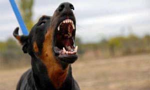 dog-aggressive-5-300x180