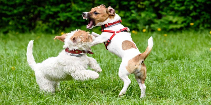 "aggressive-dog-10-800x400 ""width ="" 800 ""height ="" 400"