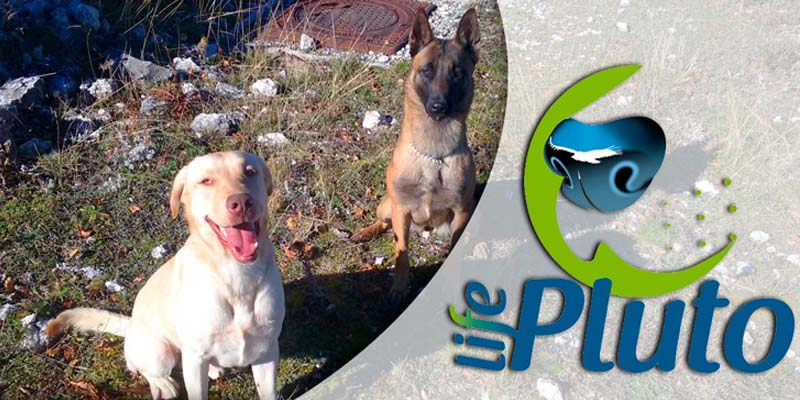 """poison-dogs-10-800x400 """"width ="""" 800 """"height ="""" 400"""