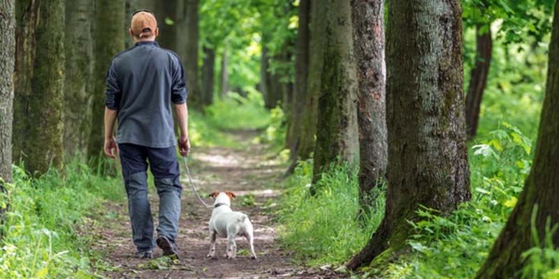 "walk-with-the-dog-2-800x400 ""width ="" 800 ""height ="" 400"