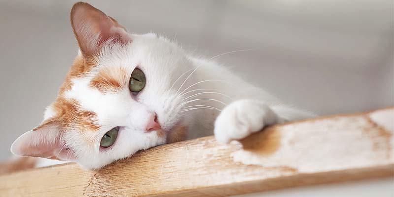 "cat-4-800x400 ""width ="" 800 ""height ="" 400"