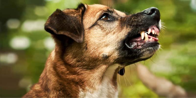 "dog-possessive-4-800x400 ""width ="" 800 ""height ="" 400"