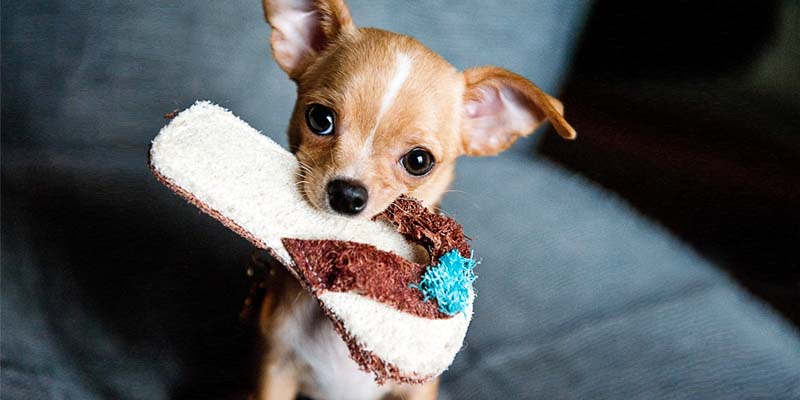 "dog-possessive-2-800x400 ""width ="" 800 ""height ="" 400"