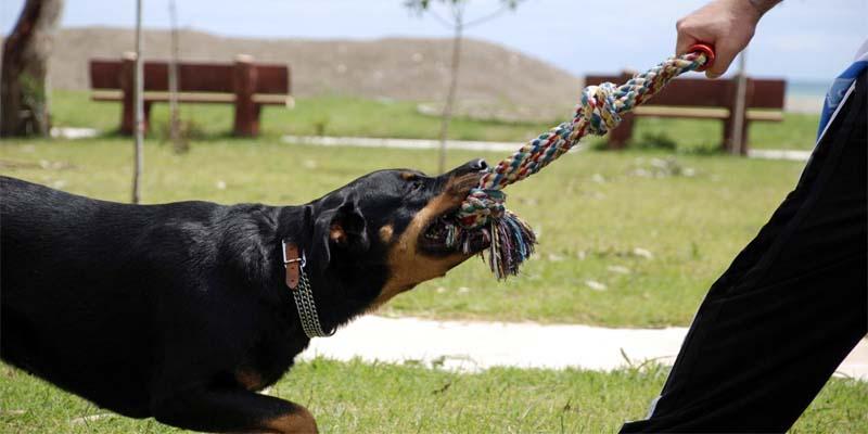 "dog-possessive-8-300x180 ""width ="" 800 ""height ="" 400"